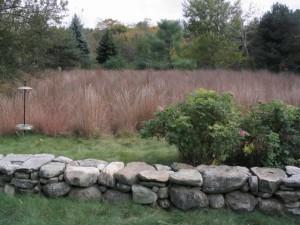 Little Bear Meadow 1