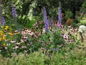 meadow diversity 2