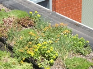 Manchester Greenroof 4