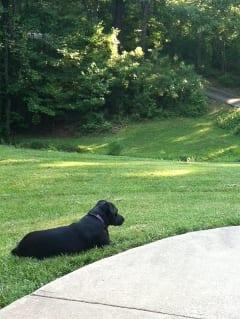 Lawn dog