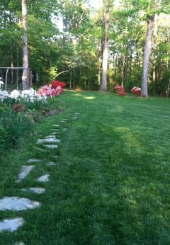 Growing an organic lawn requires commitment; seek advice and help from others practicing organic lawn care.