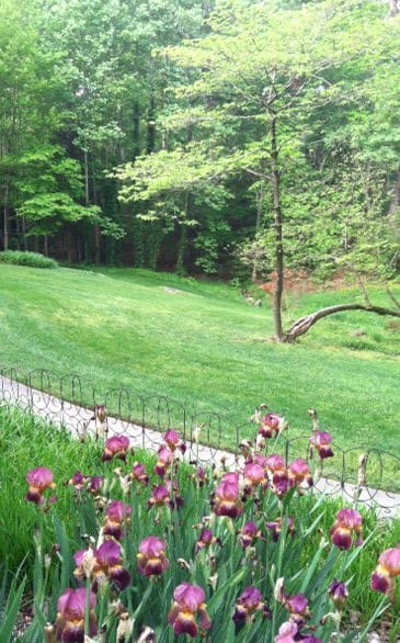 Converting my own lawn to organic practices gave me confidence to encourage my clients.