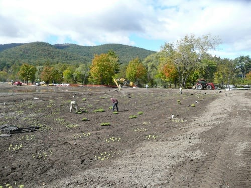 The plant contractor planted over 1,800 seedlings trees, shrubs, plants, and plugs in the swales, benches, and surrounding area the project site, including the gravel wetland shown here. Photo: GLA