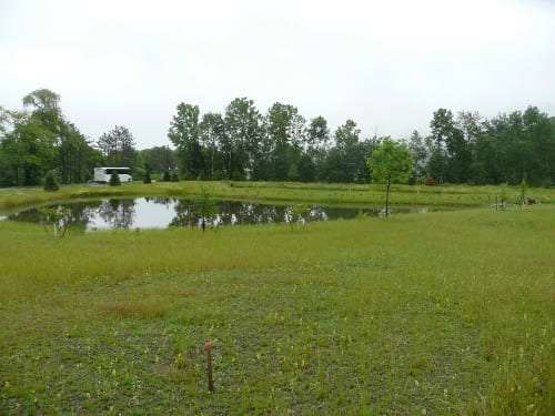 By Spring 2013, plugs have begun to fill in along the deep-water wetland pond. The gravel wetland is in the far background adjacent to the deep-water wetland