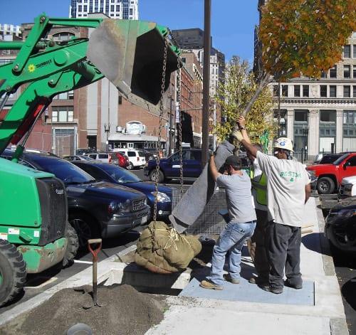 Trees were planted below grade, preventing future sidewalk upheaval.