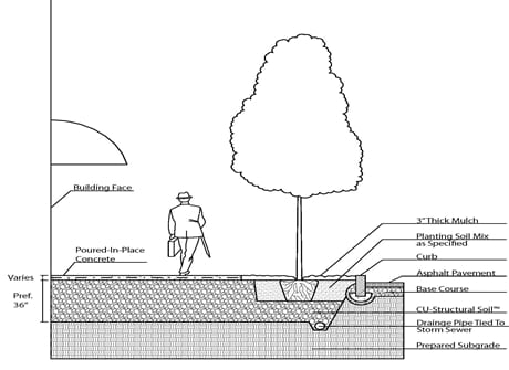 Cross-section of typical tree installation into CU-Structural Soil under pavement from curb to building face. Note where the tree pit is open, topsoil should be placed around the tree ball, but CU-Structural Soil should be placed under the ball to prevent tree ball subsidence.