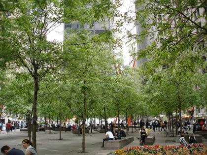 Trees at Zuccotti Park in Lower Manhattan, NY, were planted in CU-Structural Soil.