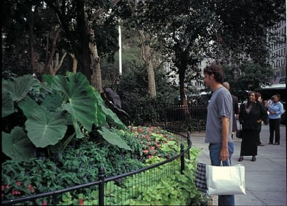 Huge, gorgeous plants like these in Madison Square Park enhance public spaces and draw in city dwellers.