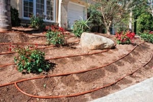 Drip lines in a planted bed with a slope show the downhill movement of the emitted water on the slope. Photo courtesy of The Plant Shed, Various Locations around Dallas-Fort Worth, TX.