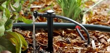 A punch-in connector on a standard drip line with micro tubing and a micro emitter on a spike is one way to provide anywhere from a drip or trickle of water up to a constant flow, either on spikes or at ground level. Photo courtesy of Keep It Green Nursery And Landscaping, Apollo Beach, FL.