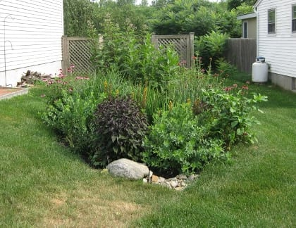 Native Plant Selection for Biofilters and Rain Gardens Ecological