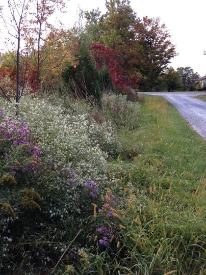 A driveway hedgerow offers habitat alongside a more managed area of the yard.