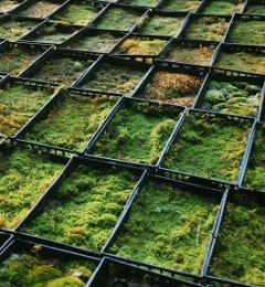 Moss trays in cultivation at Mossery, Mountain Moss' nursery in NC. Photograph by Annie Martin, www.mountainmoss.com