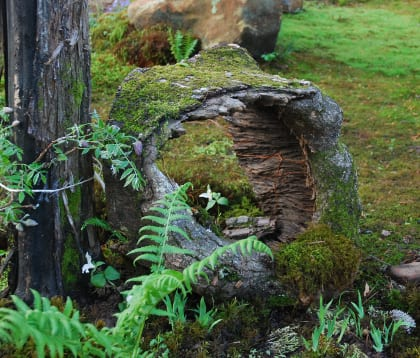Natural log portal offers a view into magical moss garden. Photo by Annie Martin, www.mountainmoss.com