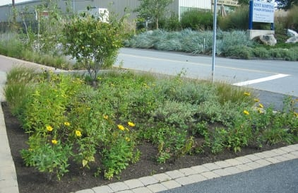 A raingarden at the Trowbridge Data Center replaced a high-maintenance lawn.