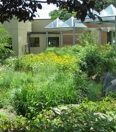 The rain garden utilizes a diverse mix of low maintenance, deep rooting native wildflowers and grass species