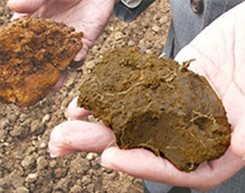 Soil in a long-term experiment appears red when depleted of carbon (left) and dark brown when carbon content is high (right). Photo courtesy Rattan Lal