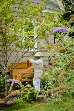 A highlight of beekeeping is sharing the harvest. Photo by Christophe Perez