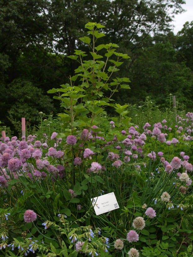 The Edible Landscape At Wellesley College Ecological Landscape Alliance