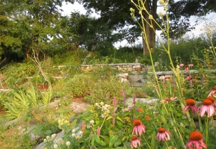 The medicinal herb garden at the author's home includes many familiar plants.