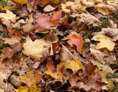 Leaves were the cause of autumn panic until I came up with a combination of equipment and know-how that let me manage leaves while saving time and money.