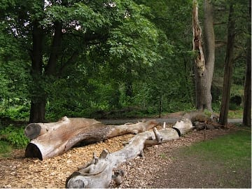 Fallen logs, remnants of Hurricane Sandy, become part of a nature play structure.