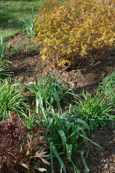 Finely mulched leaves make a nice looking mulch for planting beds.