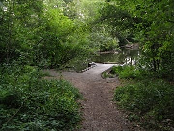 Turtle Pond is an area that needs restoration following installation of new viewing platform.