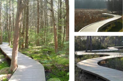 Boardwalks will allow visitors to access the Atlantic White Cedar Bog, proposed for an area of the Garden that is not presently accessible.