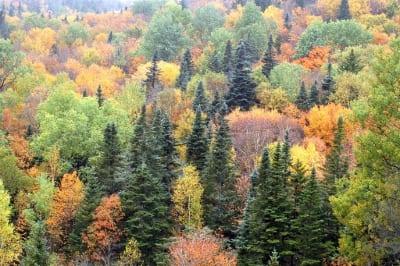 A Spruce Fir Northern Hardwoods Forest natural community.
