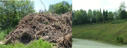 """Salvaged """"woody debris"""" and loam from site earthwork in Easton, Maine that were put through a grinder and reapplied to stabilize and revegetate a steep cut slope. Photo courtesy Studioverde."""