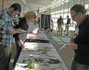 ELA Conference Plant ID Quiz Participants