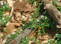 The beauty of living process: recycling organic material on the ground layer of a Delaware woodland in winter.