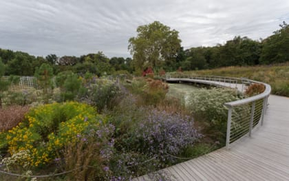 The Native Flora Garden is teems with plant and animal life.
