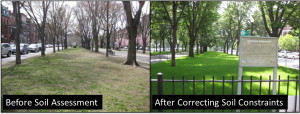 Before and After Soil Testing and Corrections