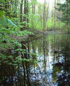 Vernal Pool.240
