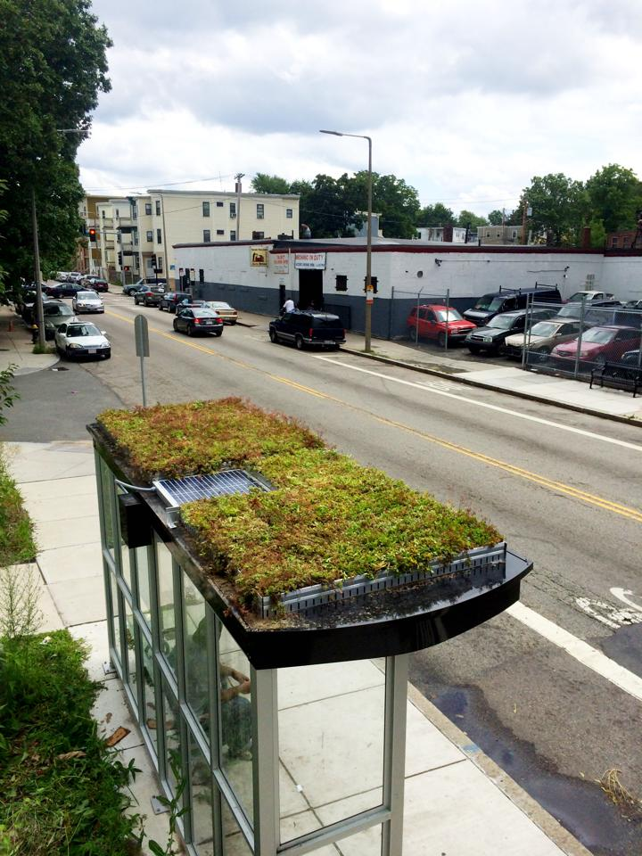 Green Roof Bus Shelter Installation Workshop Ecological