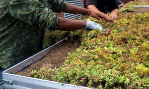 Instructing and Installing the Green Roof
