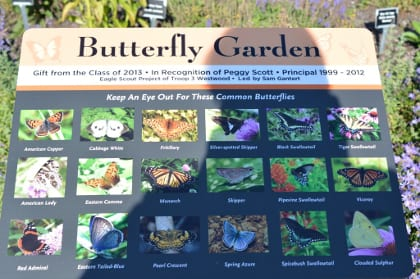 Butterfly kiosk with color photos to help the novice identify the more common butterflies.