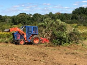 Invasive Shrub Removal - Oyster River Project