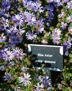 All plants had professional plant labels for easy identification.
