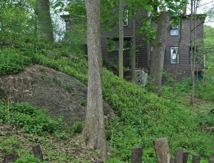 The woodlot has recovered its forb and shrub layer after removal of the dumped bricks and soil reconditioning.
