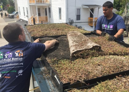 YouthBuild Boston trainees install sedum mats on the roof of a bus shelter in Hyde Park.