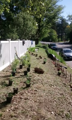 A narrow strip of land between fence and road was a maintenance challenge that became a habitat opportunity.