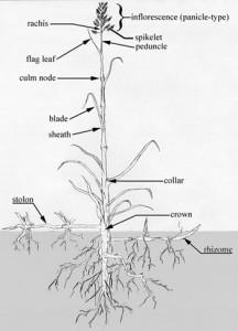 grass_diagram1