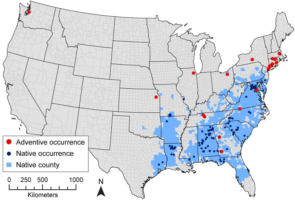 Native and adventive range of Chionanthus virginicus (white fringetree) in the continental US. Native counties according to the Biota of North America Program (BONAP; http://www.bonap.org/) are shown in light blue. Chionanthus virginicus has 132 total occurrence records with 109 located within the native range (dark blue points) and 23 located outside the native range ('adventive', red points).