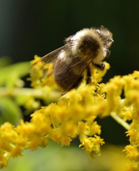 Bee.547