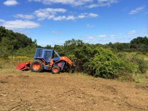 Mechanical Invasive Plant Removal