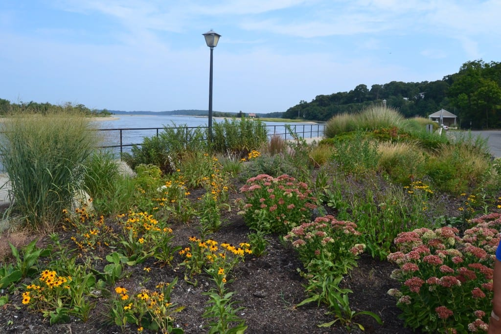 Rotary Memorial Garden, Stony Brook Harbor, Long Island planted with native plants.