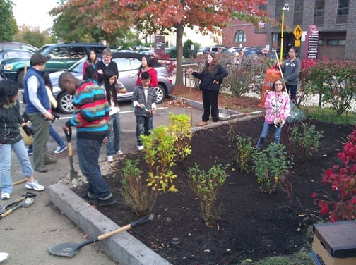 Students at the Beebe School in Malden assist with planting native shrubs in the city's first rain garden project.